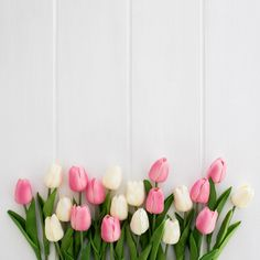 Beautiful white and pink tulips on white wooden background free photo - - Frühling Wallpaper, Nature Iphone Wallpaper, Flower Phone Wallpaper, Wallpaper Backgrounds, Wallpapers, Pink Tulips, Tulips Flowers, Pink Roses, Beautiful Flowers