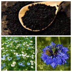 Un articol despre negrilica, condiment si remediu natural Natural, Plant, Nature, Au Natural