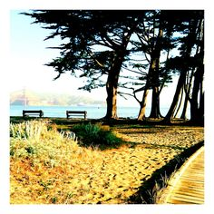 Crissy field - cypress grove, San Francisco California Dreamin', Northern California, San Francisco Pictures, Cypress Grove, Humboldt County, San Francisco City, Golden State, Places To Travel, Vip