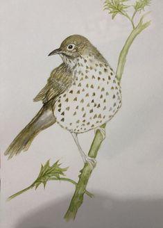 My Arts, Bird, Animals, Animales, Animaux, Birds, Animal, Animais