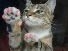 $18.95 Cats wont damage your screen while wearing Soft Paws! The alternative to declawing since 1990! Made in America. www.superhappypets.com