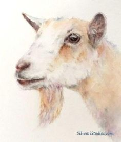 """""""Juliet"""", watercolor goat painting by animal artist Teresa Silvestri.  Original is available, in addition to  prints & cards."""