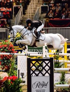 Don't we all want to be Katie Dinan? Human development/regenerative biology student at Harvard, already has competed in World Cup and Nations Cup Finals, just won the the Ocala $250,000 Grand Prix... And has lovely horses!