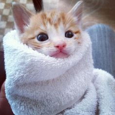 too cute to deal with. via @EmrgencyKittens