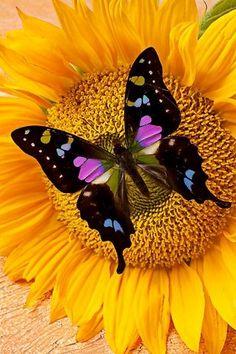 Bordado de cojín en flor #butterflies #mariposas