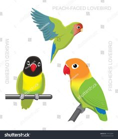 Find Parrot Lovebirds Cartoon Vector Illustration stock images in HD and millions of other royalty-free stock photos, illustrations and vectors in the Shutterstock collection. Thousands of new, high-quality pictures added every day. Parrot Drawing, Bird Design, Love Birds, Illustrator, Character Design, Royalty Free Stock Photos, Bullet Journal, Cartoon, Drawings