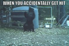 Funny Animal Pics Of The Week 21 Hilariously Funny Animals Pictures For True Pet Lovers Funny Animal Pics Of The Week One thing you can count on besides pets being a source of compani Funny Animal Clips, Funny Animal Memes, Funny Animal Videos, Funny Animal Pictures, Best Funny Pictures, Funny Animals, Cool Pictures, Funny Gifs, Crazy Photos