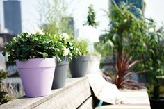 pastel elho modern flower pot