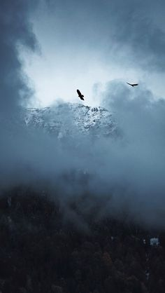 Murat DAĞASLAN #photography #photo #mountains #landscape #bird