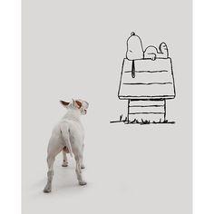Snoopy?