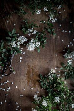 foraged wild roses | Amanda Nolan Booker