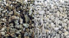 Different Types & Sizes of Aggregate for Concrete Flora Garden, Garden Plants, Recycled Concrete, Crushed Stone, Different Types, Hydroponics, Blueberry, Canning, Fruit