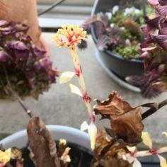 hortenzia virágok teleltetés Garden, Plants, Garten, Lawn And Garden, Gardens, Plant, Gardening, Outdoor, Yard