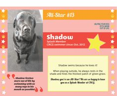 Meet CRCG Club FETCH All Star, Shadow! Shadow fetches more out of life by swimming with as many toys in his mouth as possible!
