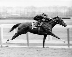 Inspirational horse....proving you got to have heart. Secretariat, Belmont 1973  became a racing legend winning the Triple Crown. Winner of the Belmont Stakes by 31 lengths. America's hero and racing legend. Go Big Red!