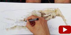 10 Reasons Why You Still Suck at Drawing