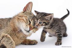 Nevena Uzurov - Mom's tenderness | Flickr - Photo Sharing!