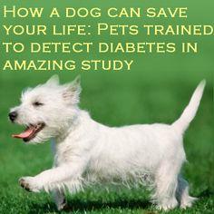 Diabetes & Pets
