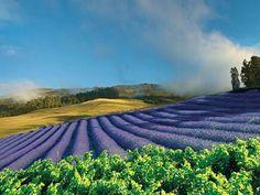 Ali'i Kula Lavender Garden, Maui ~ love this place!