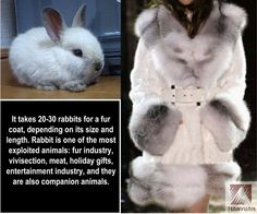 Anti-Fur Society facebook page wow. Hope that coat was worth it...