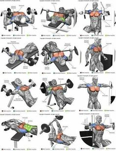 Full Body Workout Program In this article I'm going to list 3 workout plans for men to build muscle. Each workout routine is tailor. Workout Routine For Men, Gym Workout Tips, Weight Training Workouts, Biceps Workout, Fitness Workouts, Fun Workouts, Training Plan, Body Workouts, Gym Workouts For Men
