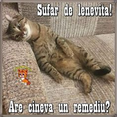 Meme, Humor, Cats, Funny, Quotes, Gatos, Quotations, Humour, Memes