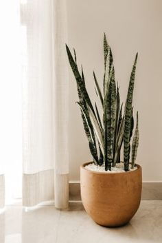 7 Dreadful Decoration Models Silver Snake Plant On Pot Indoor Air Purifying Plants, Pot, Decor, House Plants Indoor, Houseplants Low Light, Interior, Meditation Room