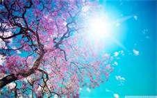 Spring Scenery -