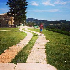 Han bare spankulerer på en vingård i Italia❤️❤️❤️ #Valpolicella #Ripasso #Amarone #FasoliGino #Soave #Borgoletto