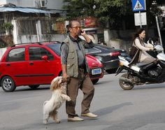 A man was spotted holding the paw of his dog as the pair crossed a busy road in Nanning, capital of southern China's Guangxi Province. As they approached the road the dog was walking on all fours but. Pictures Of The Week, Walk On, Dog Walking, All Dogs, Dog Owners, Funny Dogs, Make Me Smile, Puppy Love, Animal Pictures