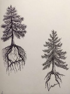 Image from http://fc00.deviantart.net/fs70/f/2013/340/6/8/pine_tree_state_tattoo_design_two_by_ramble_inthe_roots-d6wztk1.jpg.