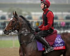 Nicholas Abbey with Joseph O'Brien Breeders' Cup morning works at Santa Anita near Arcadia, California, on Oct. Photo by Anne M. Horse Racing, Race Horses, Order Photos, Photo Store, Thoroughbred Horse, Saint Nicholas, Courses, Arcadia California, Riding Helmets
