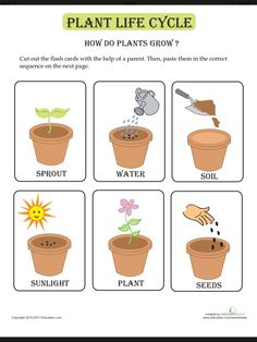 Life Cycle Flash Cards These flash cards on the plant life cycle are great for your theme.These flash cards on the plant life cycle are great for your theme. How Plants Grow, Plant Lessons, Preschool Garden, Spring Preschool Theme, Science Worksheets, Sequencing Activities, Free Worksheets, Sequencing Cards, Seed Activities For Preschool