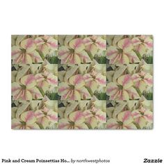 Pink and Cream Poinsettias Holiday Tissue Paper