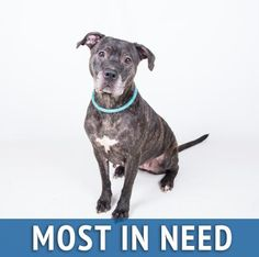 URGENT! Adopt, foster, or rescue. Era, 4 yrs. Pit bull mix. Tired of the shelter. Would like to live with you and chase tennis balls! Adoption fee waived.