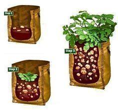 Growing potatoes on a balcony Growing Potatoes In Bags, Grow Potatoes In Container, Container Vegetables, Container Gardening, Veg Garden, Vegetable Garden Design, Garden Trellis, Garden Boxes, Garden Ideas