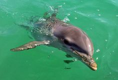 Sweet Dolphin...