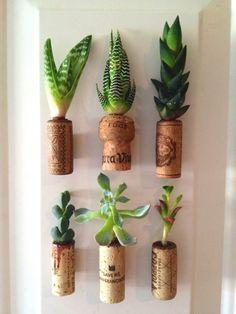 bouchons de liège avec plisueurs espèces de plantes succulentes