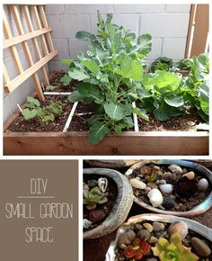 DIY Gardening for Small Spaces