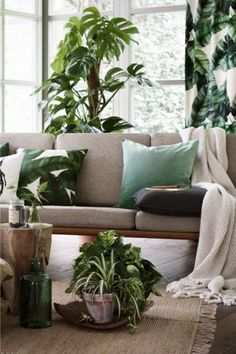 canapé gris, plantes, urban jungle interior, grey sofa
