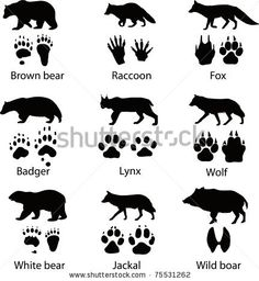 Animals and its tracks. Vector illustration - stock vector