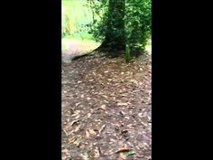 Creating a Stick Trail Part #50Things #CountryKids
