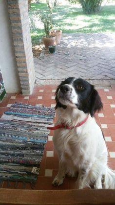 Busco un hogar para un perrito que fue abandonado y apareció en mi parcela. Necesita mucho cariño,... #adoptar #mascotas #adopcion #perros #gatos
