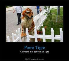 es un perro tigre?  y existen?