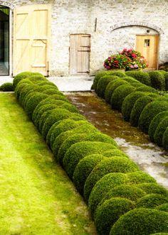 What an attractive way to arrange Baby Gem Boxwood or Micron® Holly Boxwood Garden, Topiary Garden, Lush Garden, Dream Garden, Garden Paths, Garden Art, Garden Landscaping, Garden Design, Formal Gardens