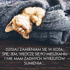 Stylowi.pl - Odkrywaj, kolekcjonuj, kupuj Cute Cats And Dogs, Animals And Pets, Powerful Quotes About Life, Weekend Humor, English Games, Good Sentences, Funny Memes, Jokes, Happy Campers
