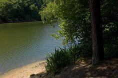 Stuart Franklin G.B. England. Balcombe. 2013. Ardingly Reservoir.