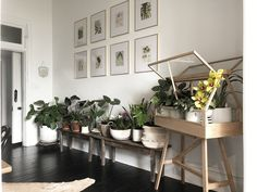 In Australia, A Florist & Family Find Healing in A 1902 Home – Design*Sponge