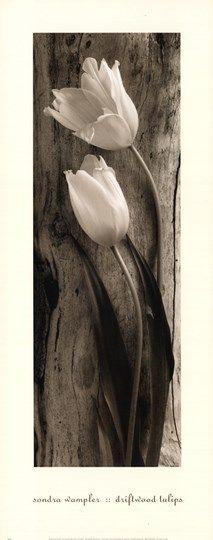 Driftwood+Tulips