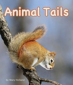 Chat with Vera: Animal Tails by Mary Holland (Arbordale Publishing) [Review & Giveaway]